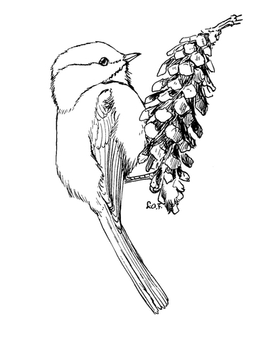 Carolina Chickadee coloring page