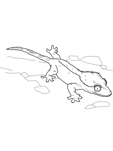 Crested Gecko coloring page