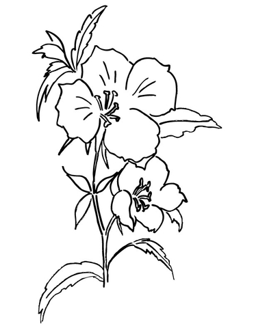 Farewell to Spring or Godetia  coloring page