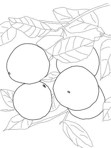Grapefruits on Tree coloring page