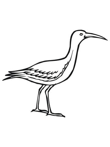 Limpkin or Crying Bird coloring page