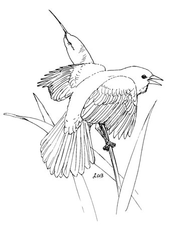 Red Winged Blackbird coloring page