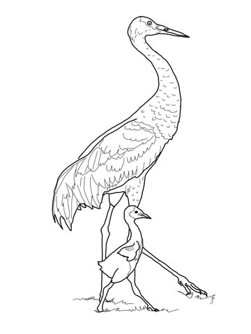 Sandhill Crane with Baby coloring page