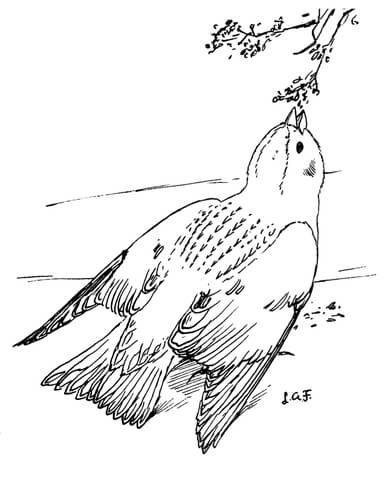 Snow Bunting coloring page
