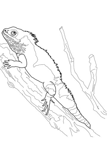 Chinese Water Dragon coloring page