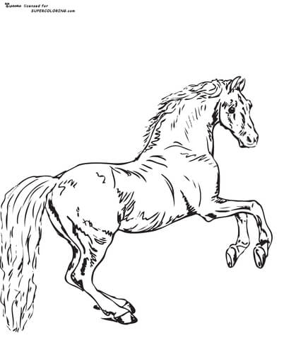 Whistlejacket By George Stubbs  coloring page