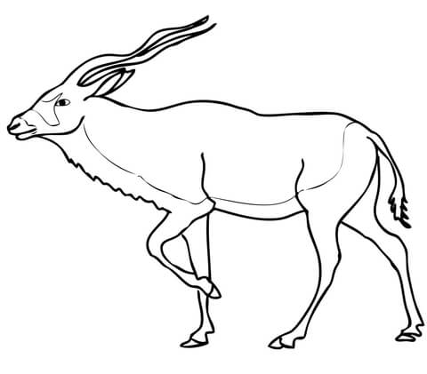 Addax Antelope coloring page