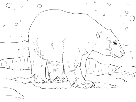 Adult Polar Bear Coloring Page