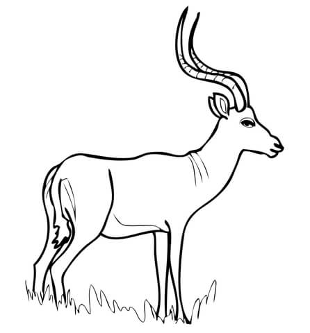African Antelope Impala coloring page