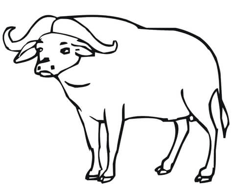 African Buffalo coloring page