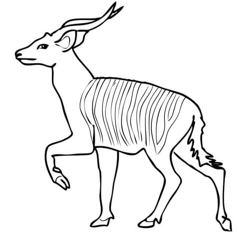 African Forest Antelope Bongo coloring page