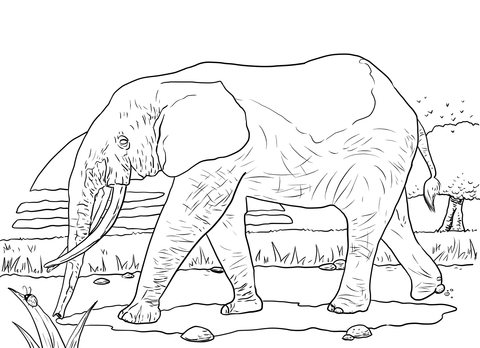 African Forest Elephant coloring page