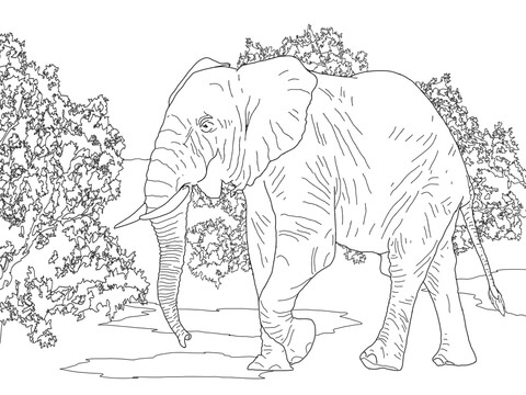 African Forest Elephant Walking coloring page