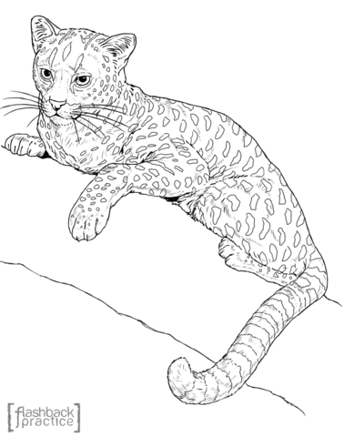 Serval Cat Coloring Pages Coloring Pages