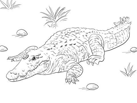 African Nile Crocodile coloring page