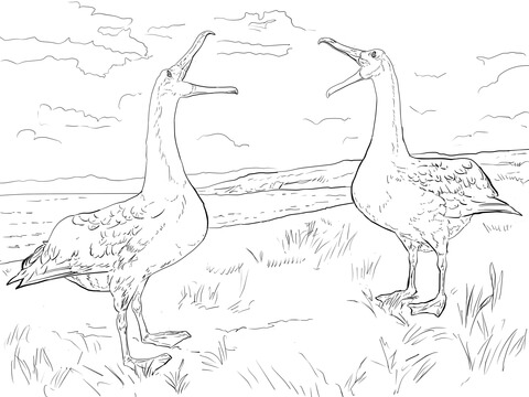 Albatross Mating Dance coloring page