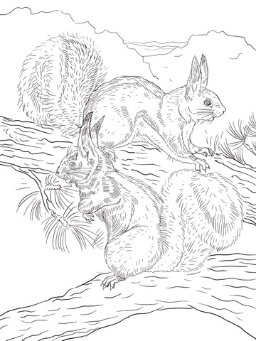 Mexican Fox Squirrel coloring page - Free Printable Coloring Pages