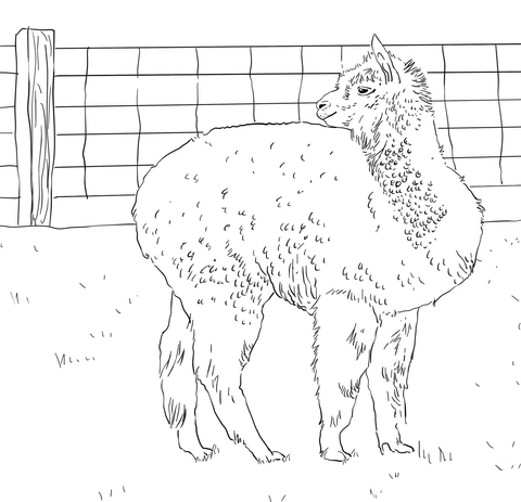 Alpaca Looks Back coloring page