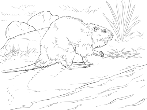 American Beaver coloring page