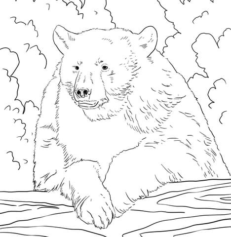 American Black Bear Portrait coloring page