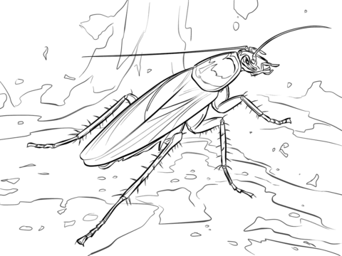 American Cockroach coloring page