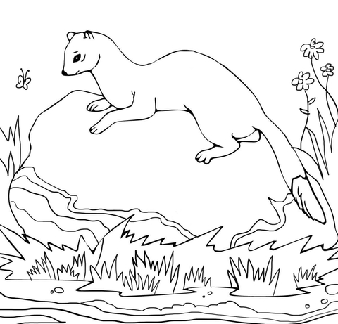 American Polecat coloring page