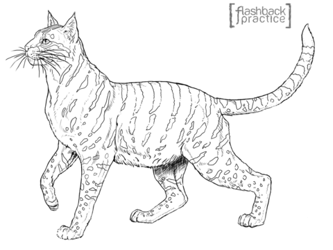 Andean Mountain Wildcat coloring page