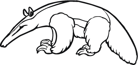 Anteater 4 coloring page