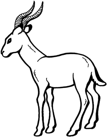 Antelope 17 Coloring Page