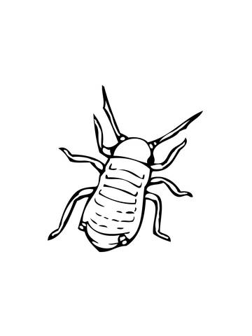 Aphid coloring page