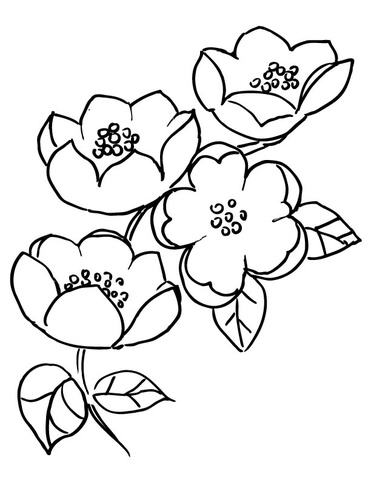 Apple Blossom Branch  coloring page