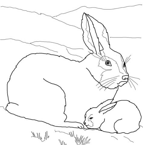 Arctic Hare Baby and Mother coloring page