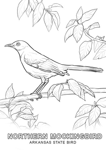 Arkansas State Bird coloring page