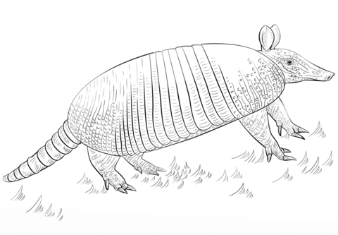 Nine-banded armadillo coloring page