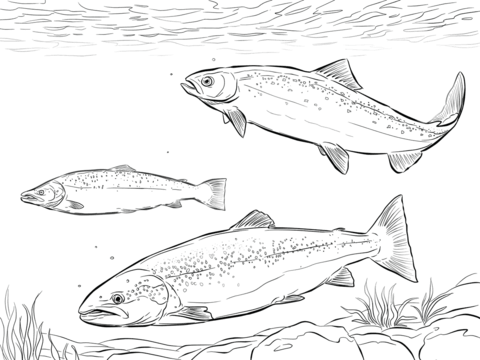 Atlantic Salmon Shoal coloring page