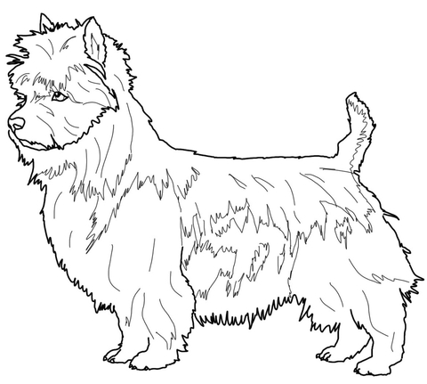 Australian Terrier coloring page