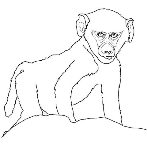 Baby Baboon Coloring page