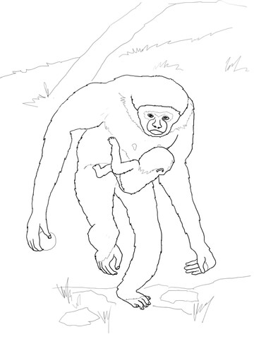 Baby Gibbon with Mother coloring page