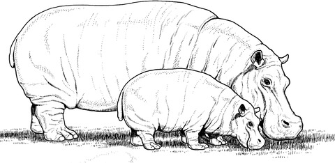 Baby Hippo with Mother coloring page