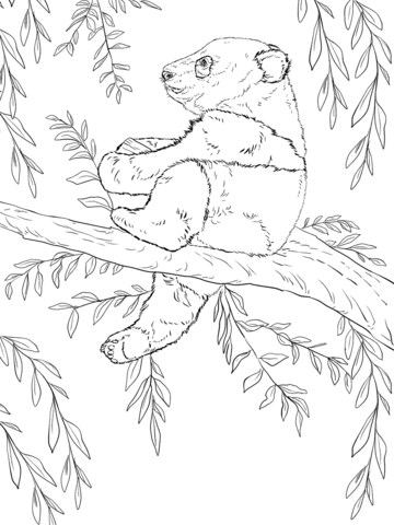 Baby Panda Sits on Tree coloring page