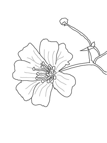 Baby's Breath Flower coloring page