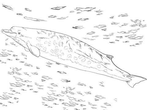 Bairds Beaked or Giant Bottlenose Whale coloring page