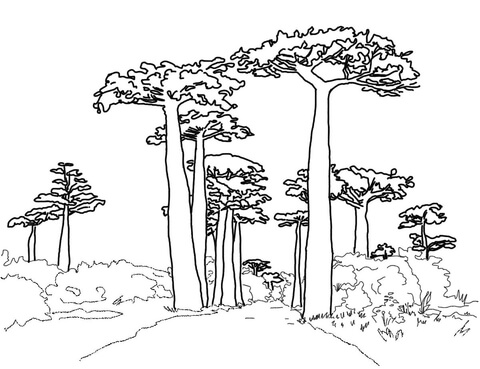 Avenue of the Baobabs coloring page