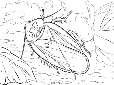 Bat Cave Cockroach coloring page