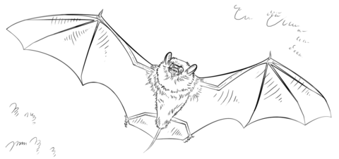 Rodrigues Fruit Bat coloring page Free Printable Coloring Pages