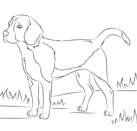 Beagle dog coloring page