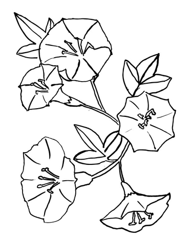 Bellflower  coloring page