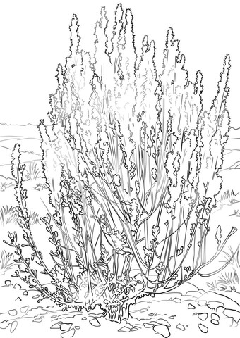 Big Sagebrush coloring page