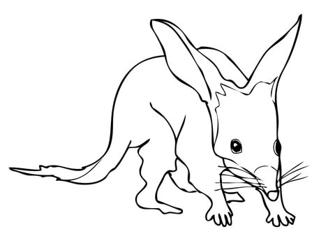 Bilby coloring page