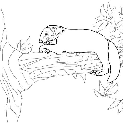 Binturong Sits on Tree coloring page